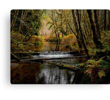 Whittaker Creek Canvas Print