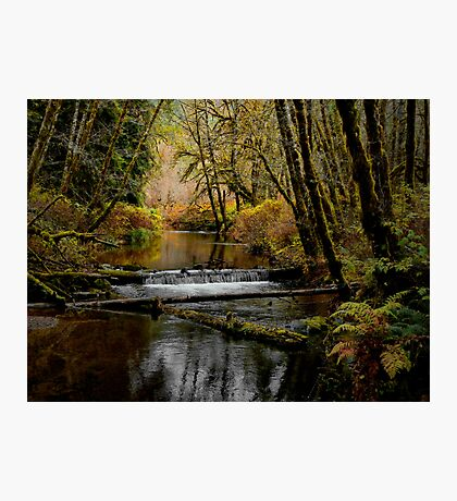 Whittaker Creek Photographic Print