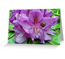 Rhododendron Snail Stop Greeting Card