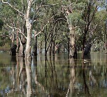 So Much Water - River Murray In Flood by Dwayne Madden