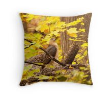 Coppers Hawk Hunting Throw Pillow