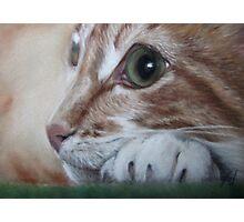 Mini Cat 1 Photographic Print