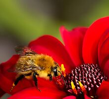 Busy Bee by Wendy Williams