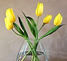 tulips by Dixon Hamby