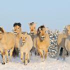 Norwegian horses in winter by Manfred Grebler