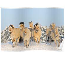 Norwegian horses in winter Poster