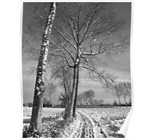 Farm track and Poplars in Winter Poster