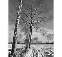 Farm track and Poplars in Winter Photographic Print
