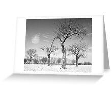 Twisted Cherry Trees in Winter Greeting Card