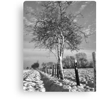 Hawthorn and fence in Winter Canvas Print
