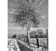 Hawthorn and fence in Winter Photographic Print