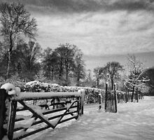 Farm gate and trees in Winter by Steven House