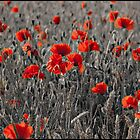 Mono Crop & Poppy by Maxmel