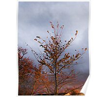 Late Autumn, late Sun, Gloucestershire, UK Poster