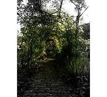 Green Garden Bower Photographic Print