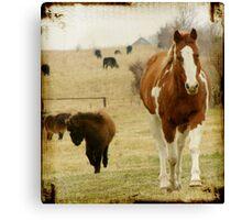 Flashy and The Mini Foal Canvas Print