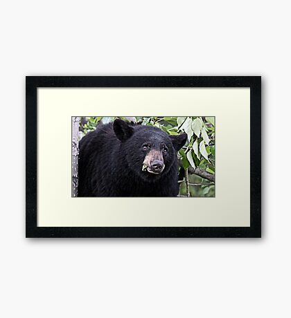 Welcome To My Tree Framed Print