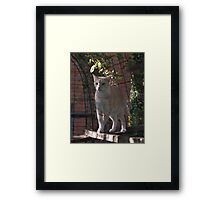 Raymond in the Cattery - Cattery Series #1 Framed Print