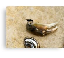 Fly on a sand beech Canvas Print