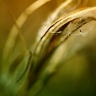 Abstract grass by Caterpillar