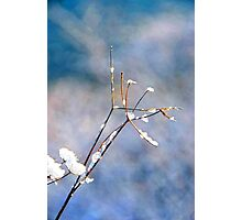 Ice Blossoms Photographic Print