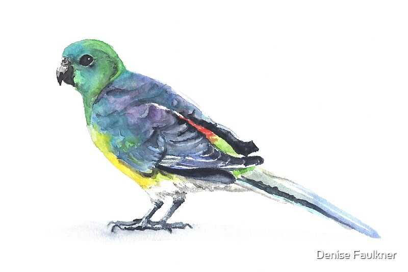 Red Rumped Parrot By Denise Faulkner Redbubble