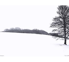 A tree in Winter by photicimage
