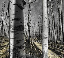 The Last Signs of Fall  by Saija  Lehtonen