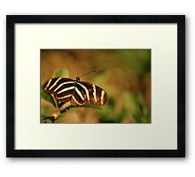Show Your Stripes Framed Print