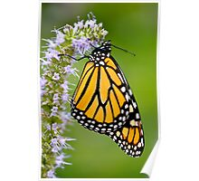 Summer Day in a Butterfly Garden III Poster