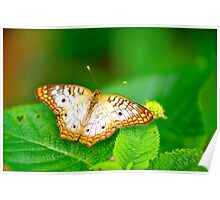 Summer Day in a Butterfly Garden IIV Poster