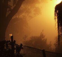 Mist & Gauge.... by debsphotos