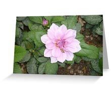 A brilliant purple flower Greeting Card
