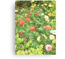 A beautiful happy flower dance Canvas Print