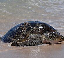 Female Sea Turtle by Gerrart