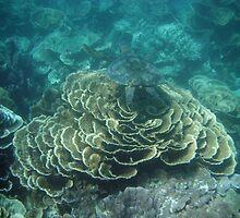 Sea Turtle-Coral Bay by Gerrart