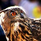 Eagle Owl II by loiteke