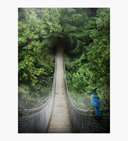Lynn Canyon , suspension bridge Photographic Print