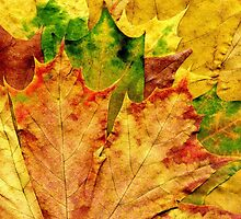Detailed Fall Maple Leaf Texture 10 by AnnArtshock