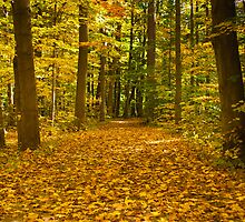 Leaf Covered Path in Fall  by Henry Plumley