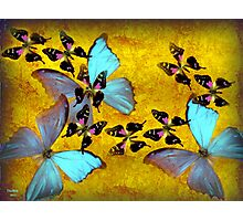 my little beautiful butterfly Photographic Print