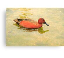 Water Duck Canvas Print