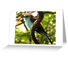 Racket-tailed Roller Greeting Card
