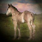 Ponytail by Carol Bleasdale