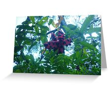 Srange fruit hanging from a tree Greeting Card