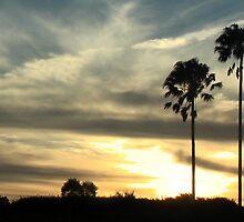 palm trees by LlandellaCauser