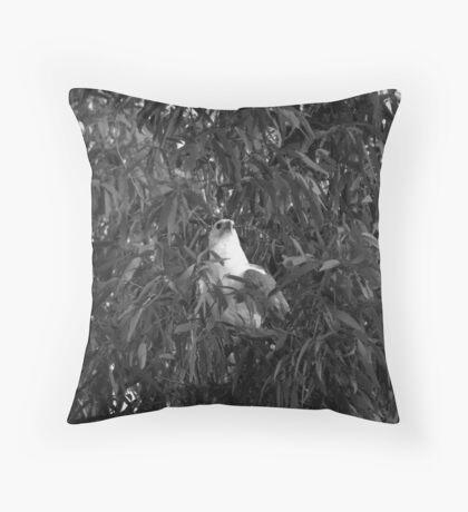 Eagle, Kakadu Throw Pillow