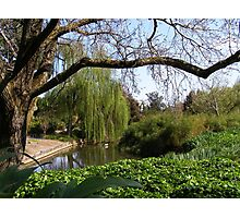 Peaceful Corner, Adelaide Botanic Gardens. Photographic Print