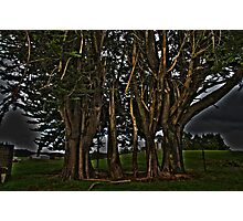 Green Trees Photographic Print