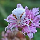 Crab-Spider by Rick Playle